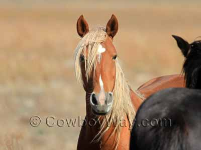 Light chestnut horse with a flaxen mane and tail