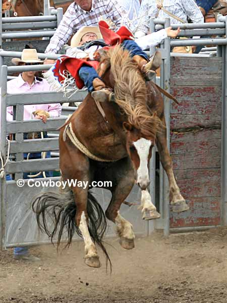 Bareback Bronc Riding Pictures Page 1