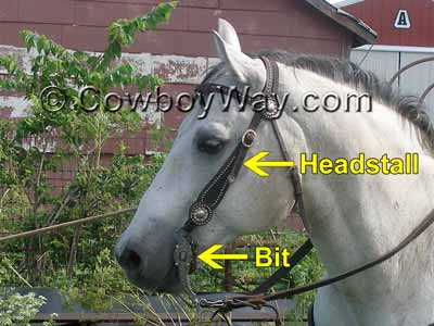 A bridle on a gray horse