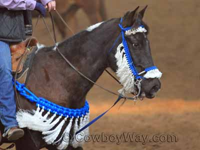 A leather breast collar with silver conchos