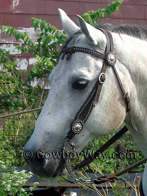Matching conchos on a bridle