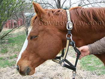 Bridle a horse: Remove the halter to put on the bridle