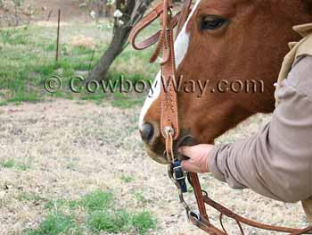 Lifting the bridle into the horse's mouth