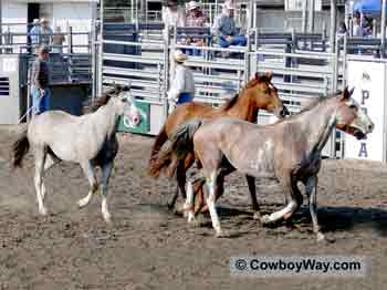 Rodeo broncs loose in an arena