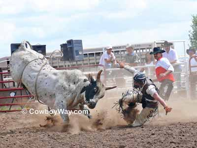 Bull rider getting hit by a bull in the helment