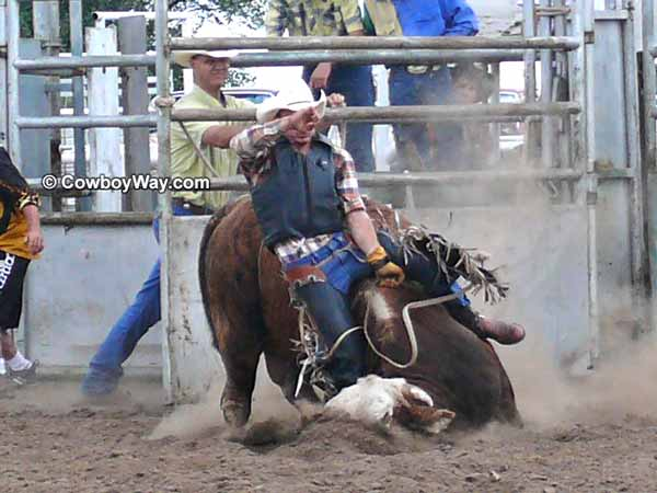 Bull riding wrecks: A bull falling with a bull rider