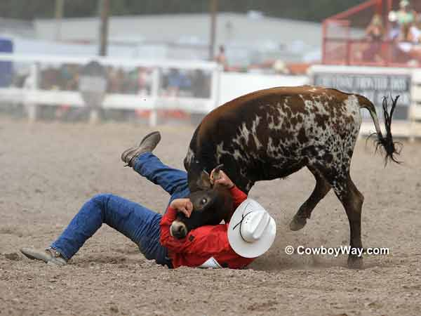 Steer wrestler has trouble with a steer