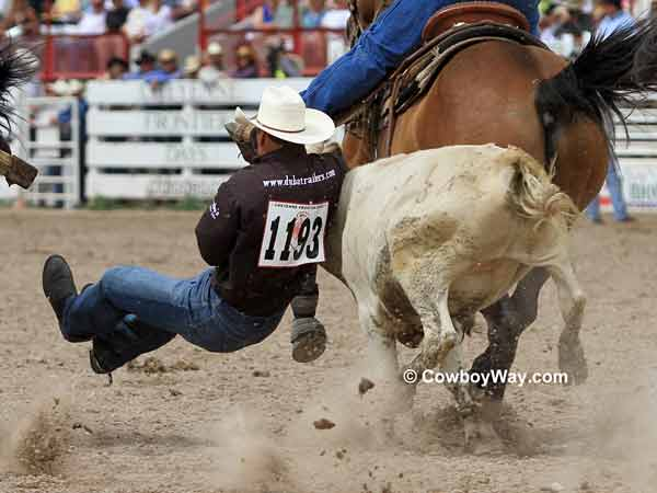 A steer wrestler with his feet off the ground