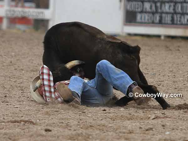A steer wrestler nearly face-to-face with his steer