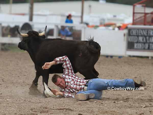 A steer manages to pull away from a steer wrestler