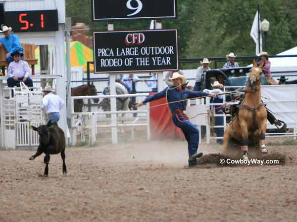 A tie-down roper runs down the rope
