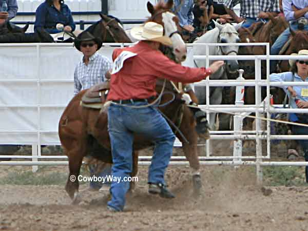Calf Roping Supplies a Calf Roping Horse With His