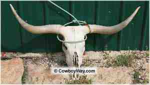 Team roping legal head catch: Around both horns