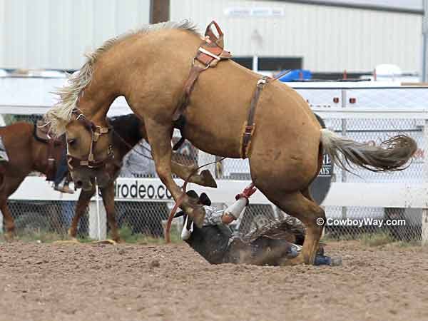 A bronc rider gets bucked off
