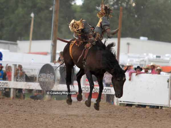 Cheyenne Frontier Days Bareback Bronc Riding Photos Page