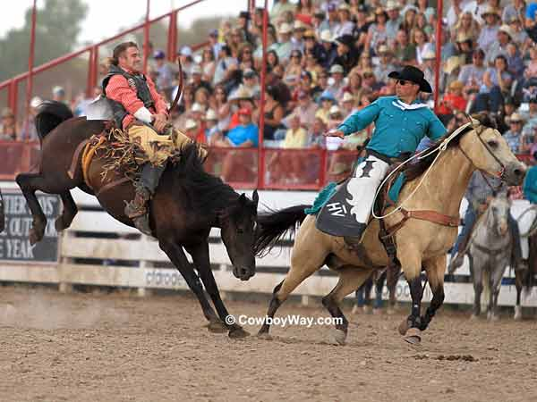 A pickup man moves in on bareback bronc rider Joe Gunderson and bronc Wilma
