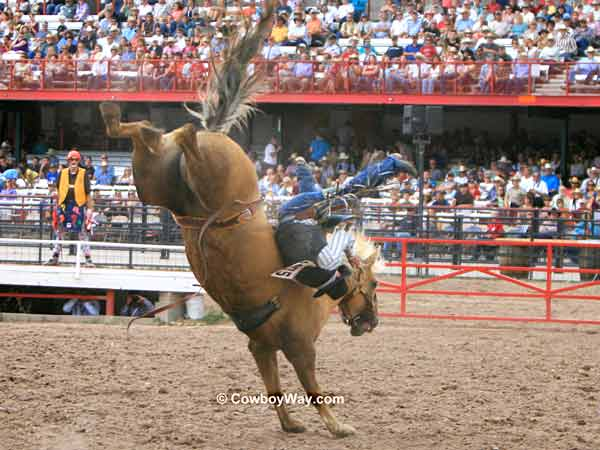 A bronc rider comes off his bronc