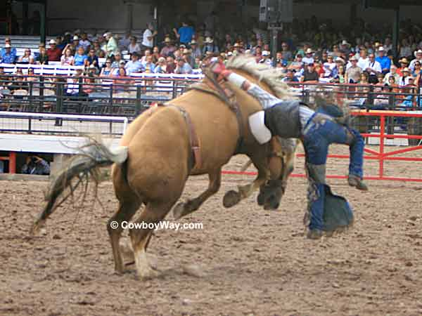 A bareback bronc twists in the air
