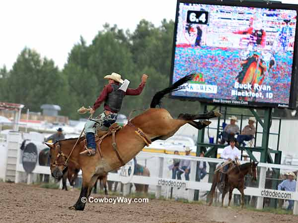 Saddle bronc rider Buck Ryan and Stepper