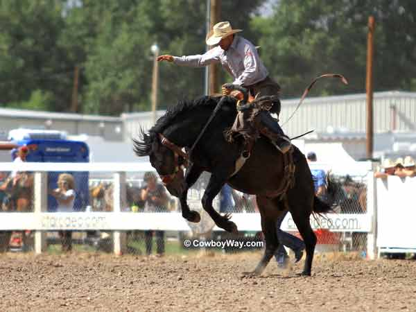 Cheyenne Frontier Days Saddle Bronc Riding Photos Page 2