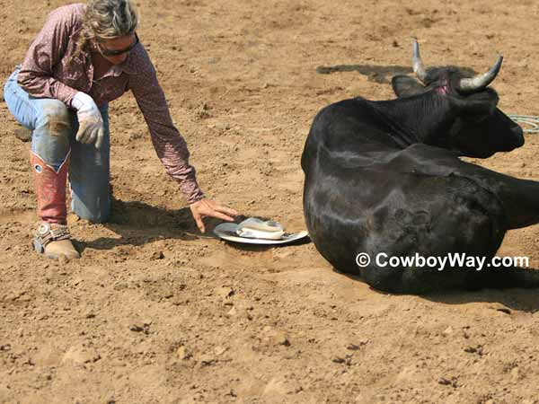 A cowgirl's hat is flattened by a steer