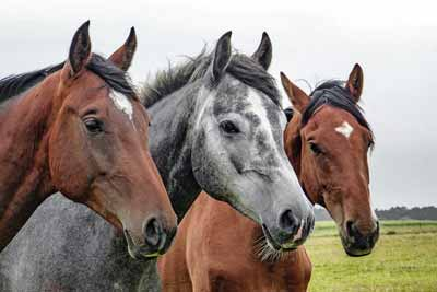 Horses, farms, or ranches may need their own domain name