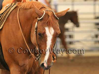 Double ear headstall on a horse