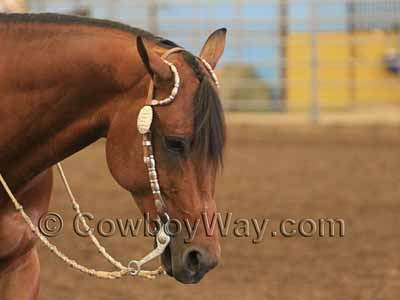 Fancy bridle with double ear headstall