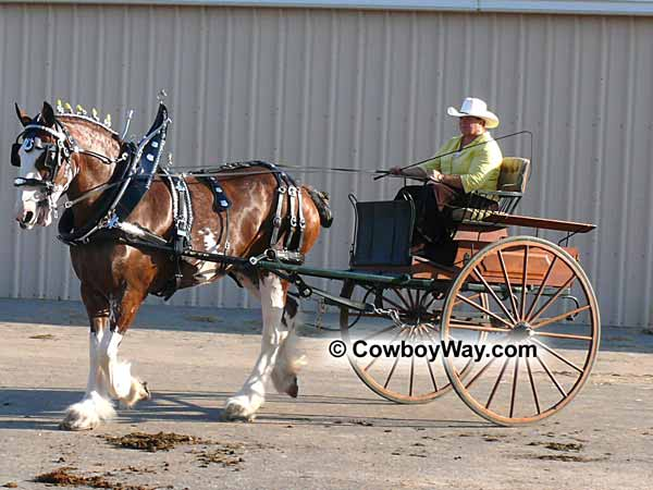 A Belgian draft horse pulling a cart