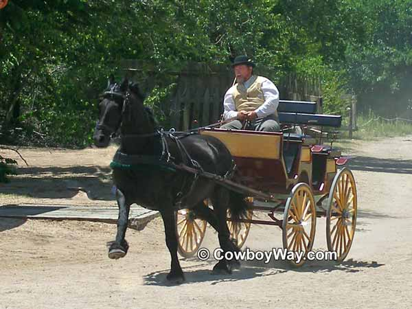 Friesian pulling a buggy