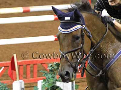 Navy blue ear bonnet on a jumping horse