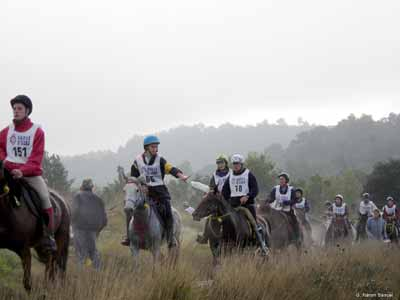 An endurance ride with several horses and riders