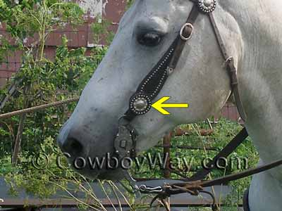 A horse headstall with Chicago screws