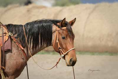 Portrait of a horse in canvas wall art