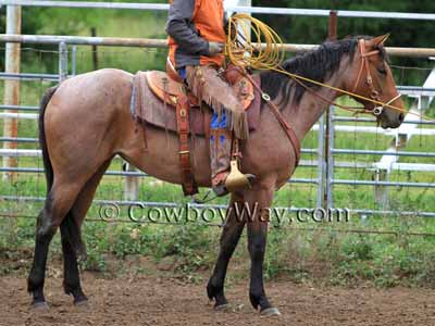 Horse colors: Bay roan