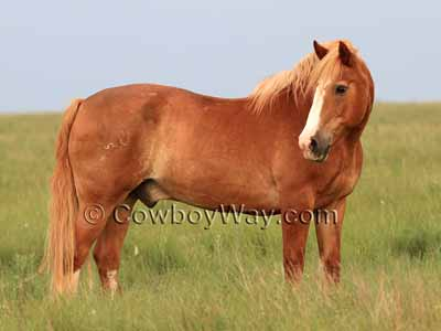 Horse colors: Sorrel with flaxen mane and tail