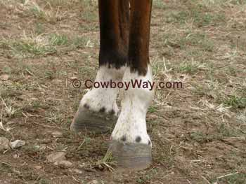 Horse facts: Ermine marks