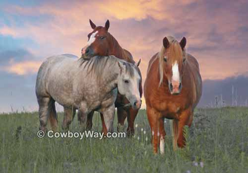 Picture of three horses together