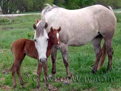 A gray mare and her foal