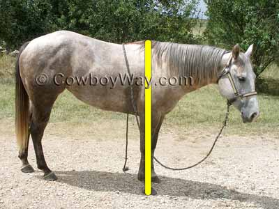 Measure a horse's height