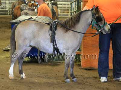 A grullo miniature horse wearing harness