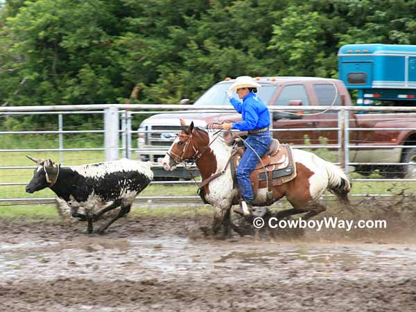 A cowgirl on a Paint horse chase a steer