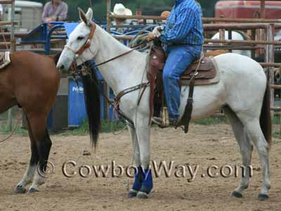 A saddled mule wearing a roping saddle