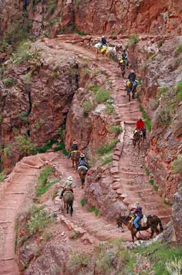 Saddles mules carrying riders down a steep switchback trail.