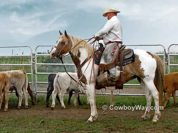 A Paint mare ready to rope calves