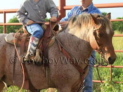 Pony saddle on a roan pony