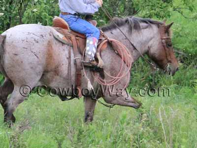 A ranch pony saddle