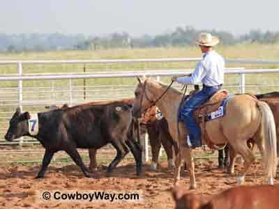 A Ranch Cutting horse sorts a cow out of the herd