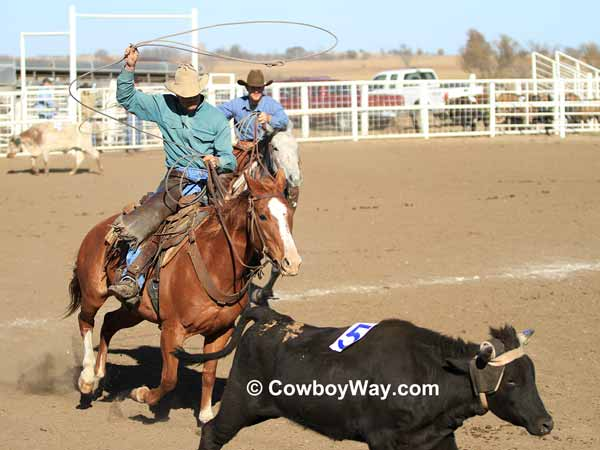 Two cowboys chase a steer to rope it