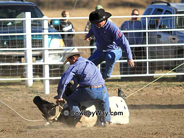 A ranch rodeo contestant jumps over a steer